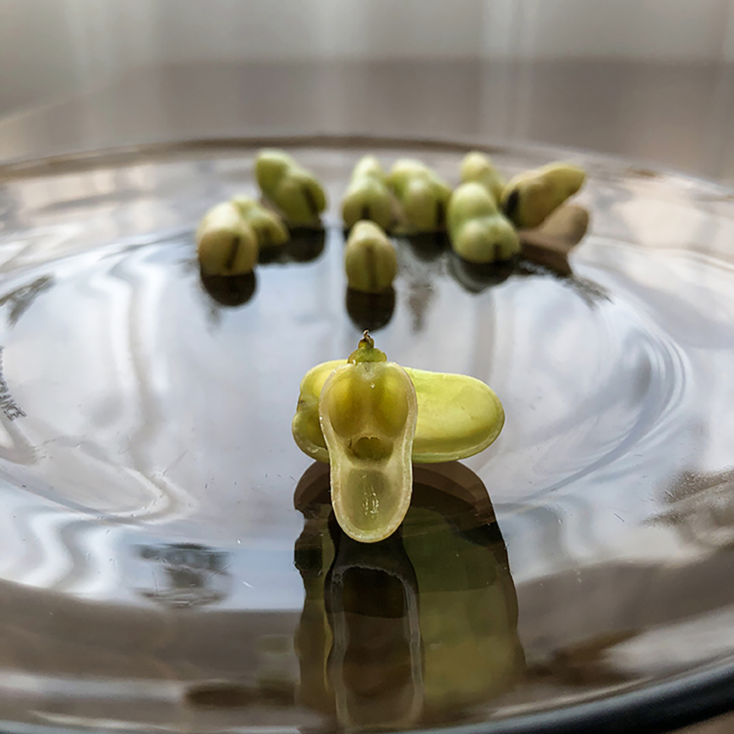 """The broad bean is looking at us like the """"scream"""" painting; we're both frightened by each other. Who has more sanitizer on hands, me or him?"""